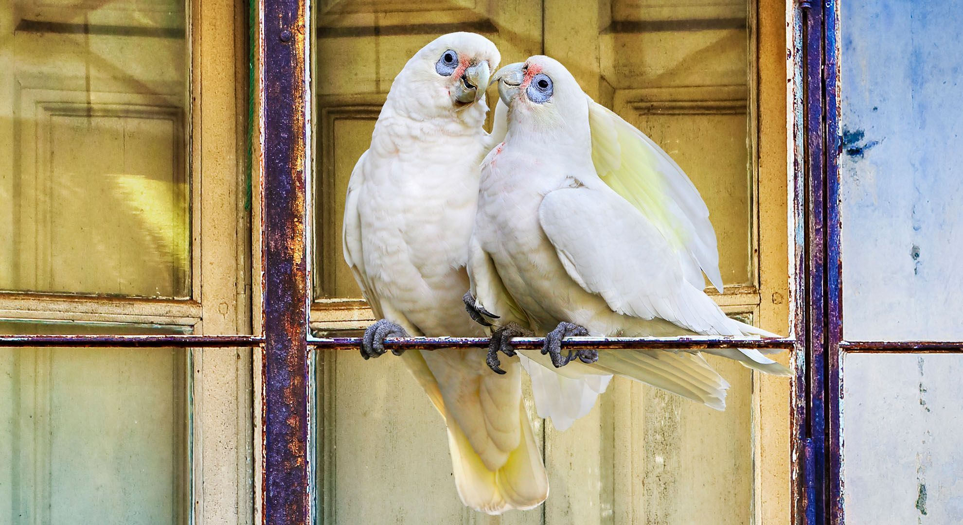 Balcón Plumicromado / A colouful balcony of feathers