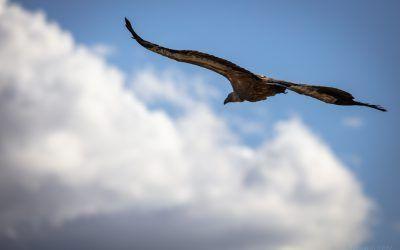 Big birds